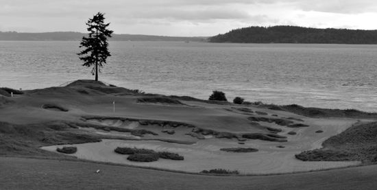 Chambers_Bay_The_Tree